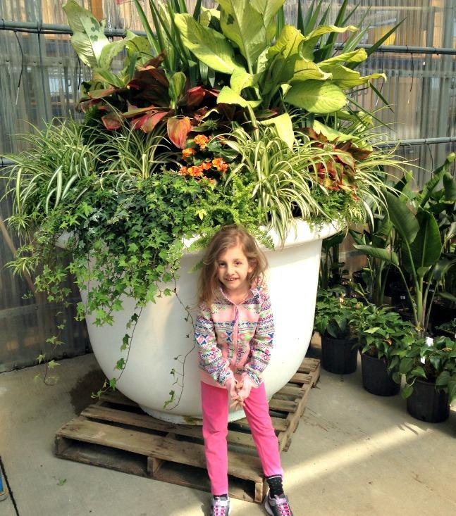 large houseplant