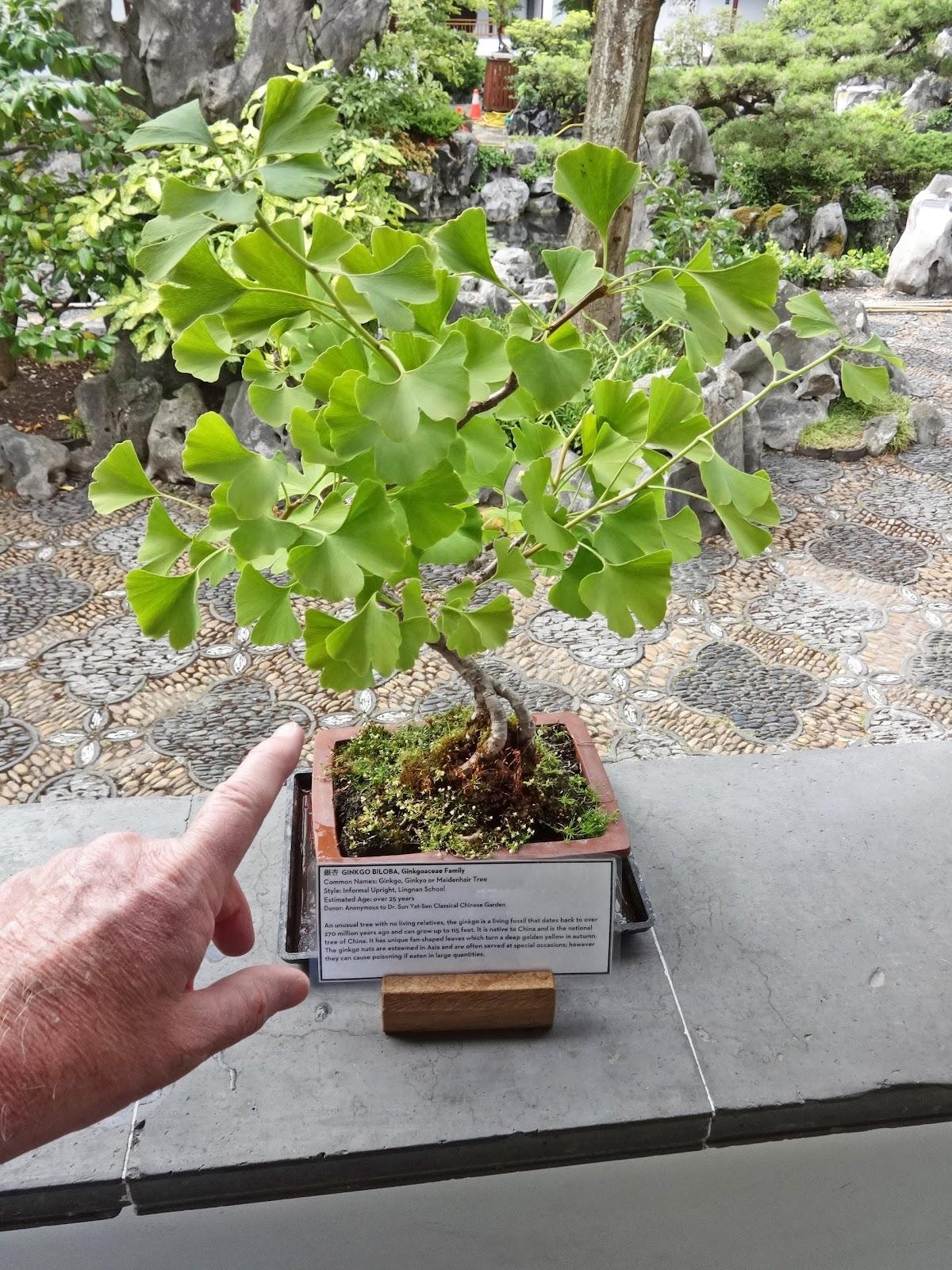 Jax Stumpes 2015 Canada West Sun Yat Sen Garden 6 25 2015
