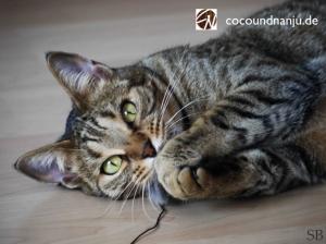 Savannah-Katze Coco
