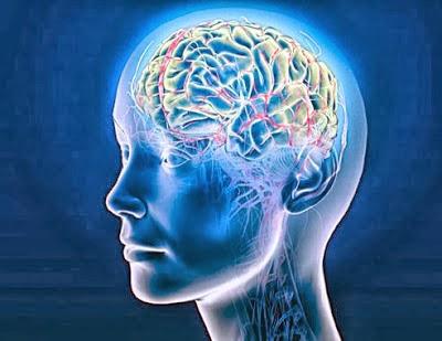 Brain Alzheimers