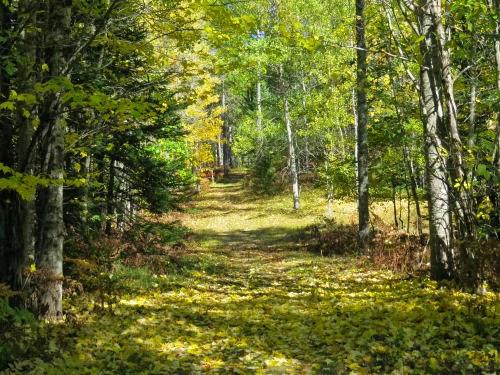 Ocqueoc Trail