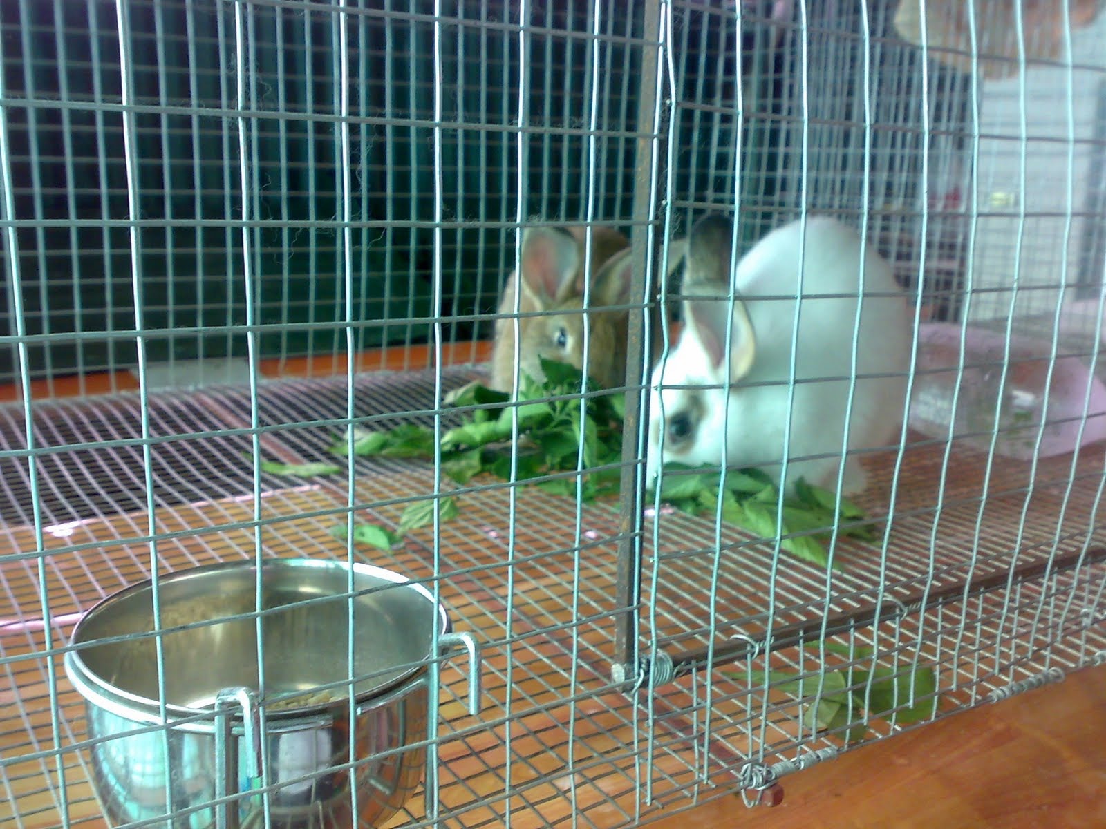 Raising Rabbits: August 2011