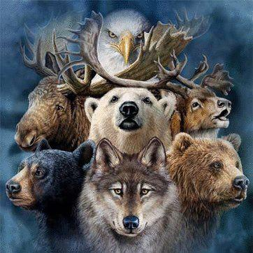 Native American animal symbols can encompass just about all the ...
