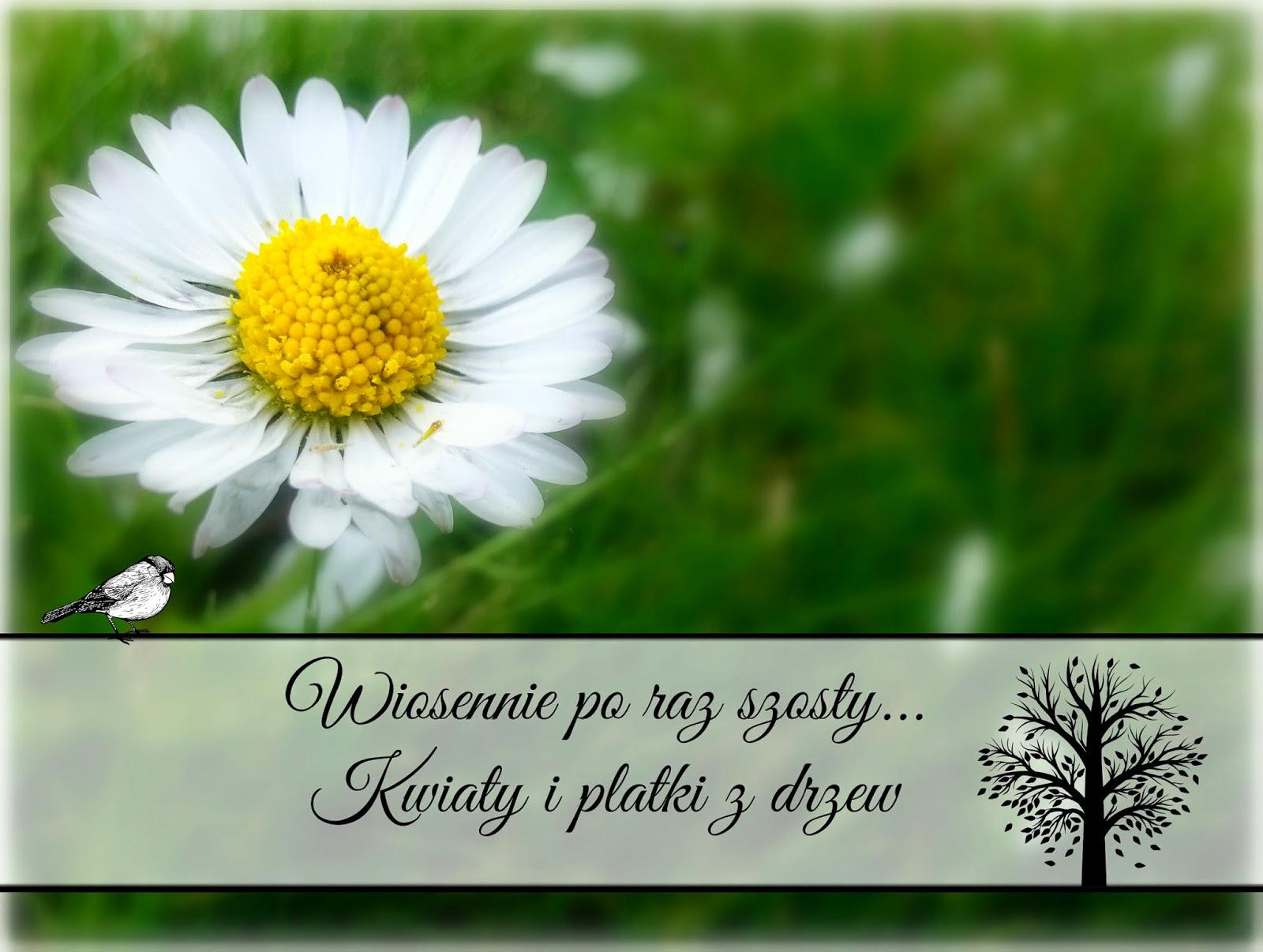 wiosna kwiaty i płatki