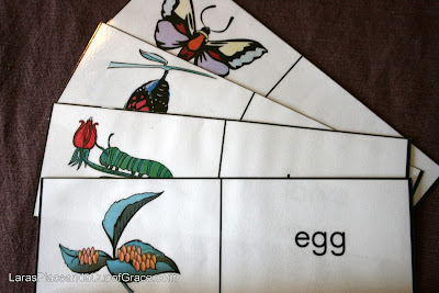 toddler homeschool, butterfly unit study