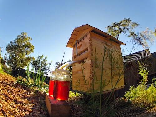 Как сделать автоматическую ферму пчел