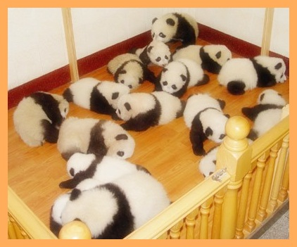 videos musicales de el grupo panda: