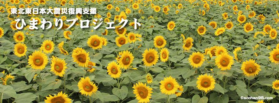 東北東日本大震災復興支援「ひまわりプロジェクト」