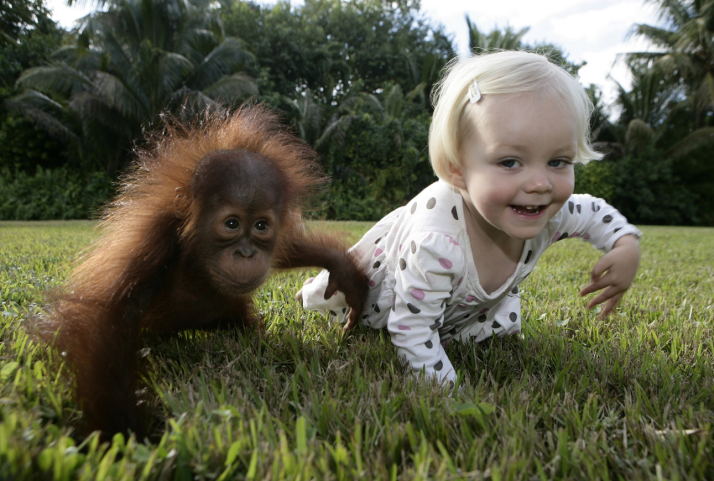 human-chimpanzee-babies_03.jpg