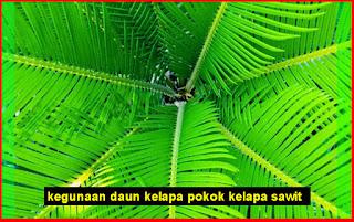 Kegunaan Daun Pokok Kelapa Sawit