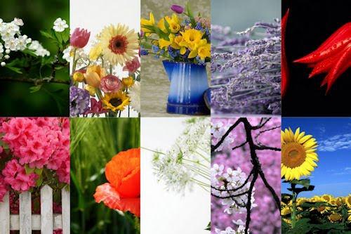 Flores y Arreglos florales para el Día de las Madres II