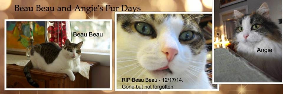 Beau Beau & Angie's Fur Days