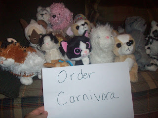 Order Carnivora (The bears were absent from this picture!)