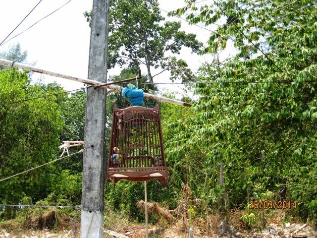 тайцы вывешивают птиц в клетках на улице