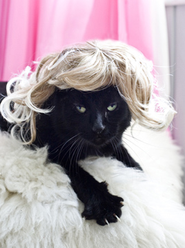 imagenes de gatos divertidos