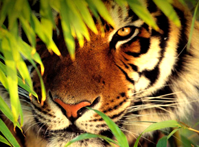 Ranthambore National Park-Best Place to Spot The Majestic Tigers ...