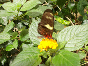 Butterfly enclosure.