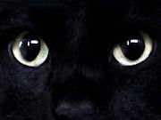 Black Cat Face Wallpaper. black cat face wallpaper animal digital photo cat face wallpaper