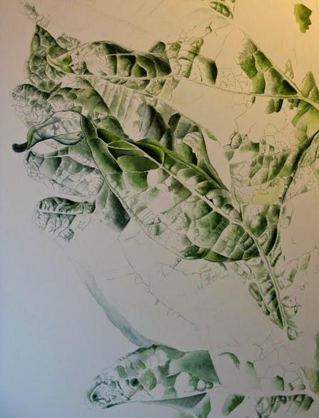 Artichoke Leaf (Cynara cardunculus var. scolymus)