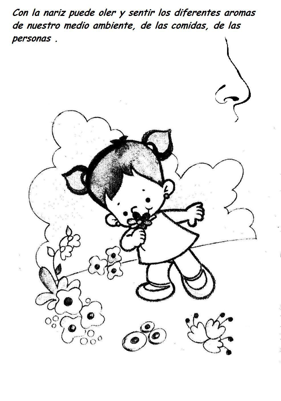 Fichas Infantiles: Fichas de los sentidos para imprimir