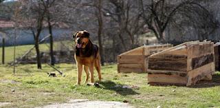Rambo surveying his kingdom