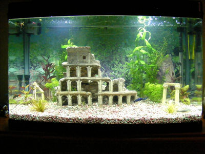 tropical fish tank guide