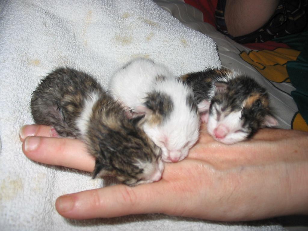 Magazines-24: Baby kittens, cute baby kittens, baby kitten