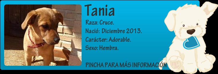 http://mirada-animal-toledo.blogspot.com.es/2014/02/trufa-y-tania-bebes-en-adopcion.html