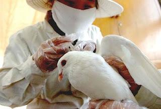 Bird Flu - H7N9