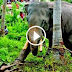 Elephant Rampage at temple Latest Kerala,