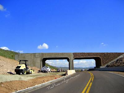walk over bridge at 59th ave in thunderbird park