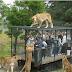 Έξυπνο! Μέσα από κλουβί οι άνθρωποι κοιτάζουν τα ζώα σε ζωολογικό κήπο...