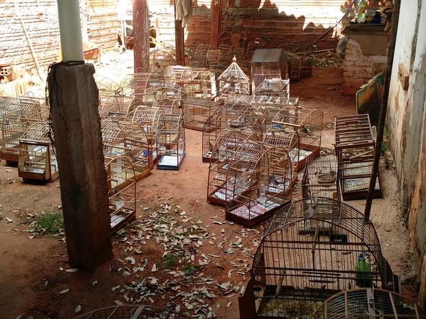 Pássaros foram apreendidos em Lins (Foto: Divulgação / Polícia Militar Ambiental)