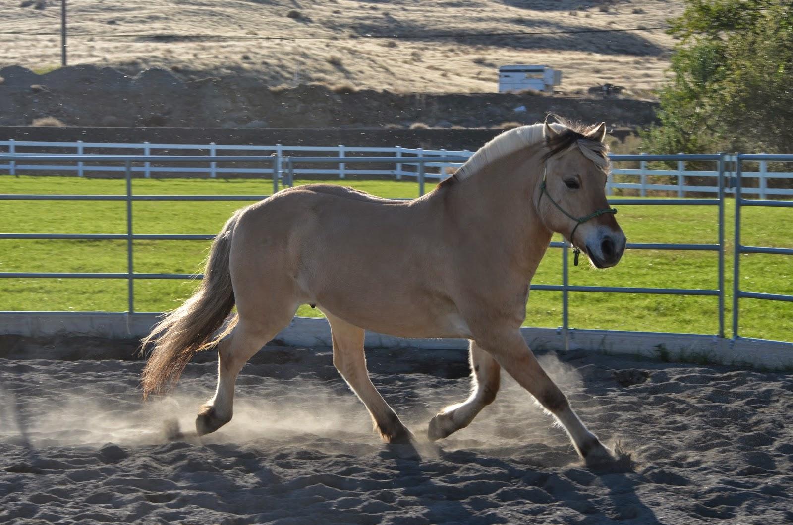 Horse extended trot