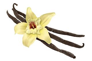 gli ingredienti magici: la vaniglia
