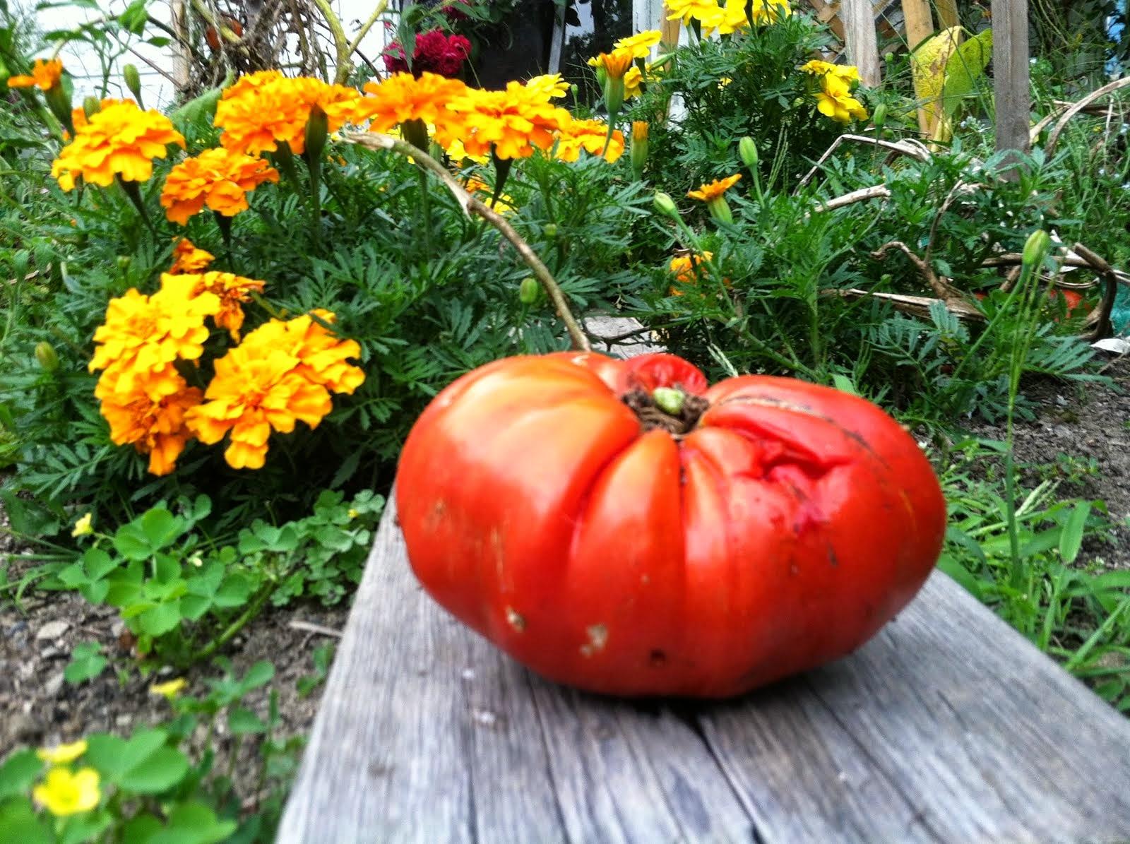 Fall Garden 2014