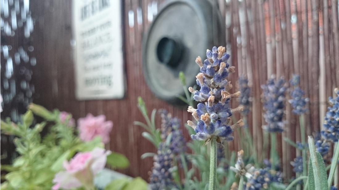 Lawenda na balkonie, kwiaty balkonowe, aranżacja balkonu, różowa surfinia, pachnąca surfinia