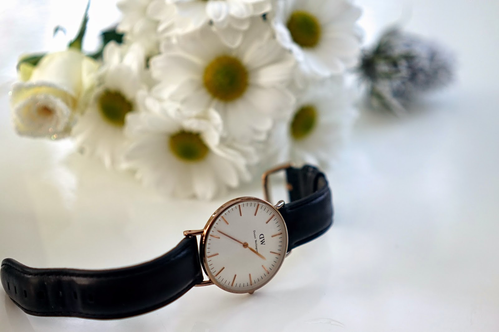Daniel Wellington Lady Sheffield Watch