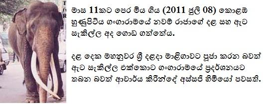 ... tusker 'Nawam Raja' : Gossip Lanka News And Sri Lanka Hot News
