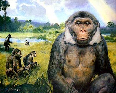 hominidos fosiles Oreopithecus