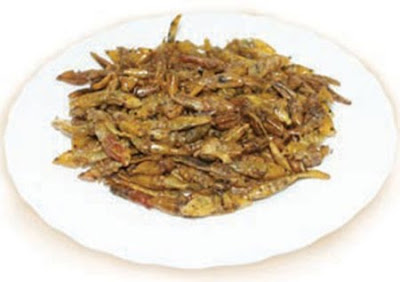 Delicious Edible Insects Seen On www.coolpicturegallery.us
