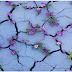 Nơi đất khô cằn, sỏi đá vẫn mọc lên những chùm hoa thật đẹp…