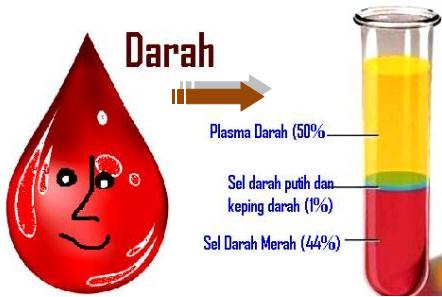 Pengertian, Fungsi, dan Kandungan Plasma Darah