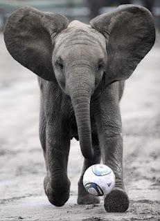 Elefante - Jogador revelação futebol