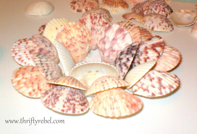 seashell-candle-holders
