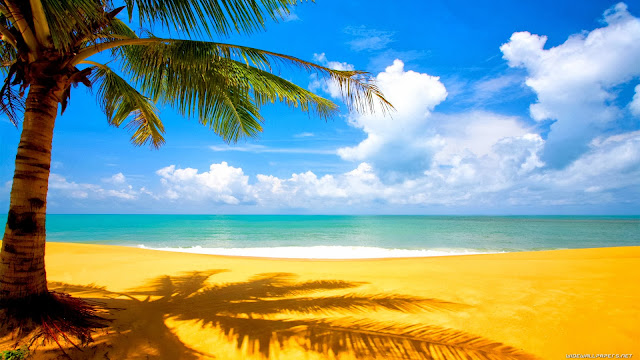 Coconut tree on the beachside HD Wallpaper