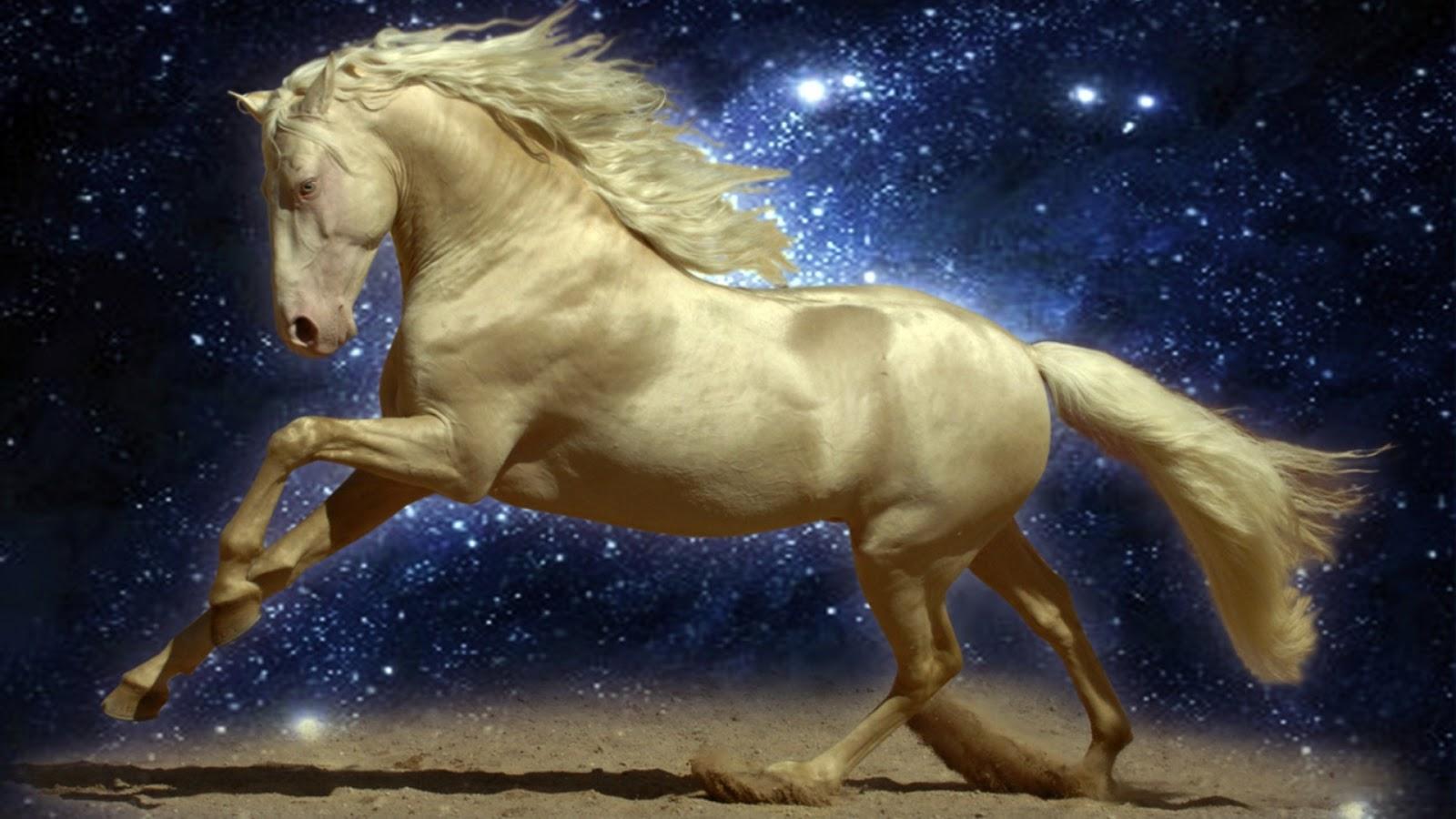 Top   Wallpaper Horse Desktop Background - Horse++hd+wallpapers+9  2018_366320.jpeg