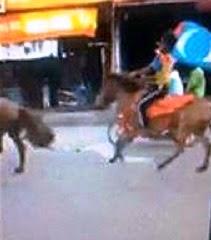 Video Hebat Tentera berkuda di PERMATANG PAUH