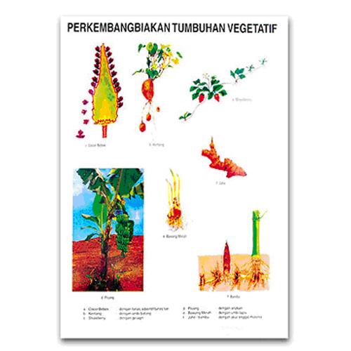 Perkembangbiakan Tumbuhan Secara Vegetatif - Perkembangbiakan vegetatif buatan - Perkembangbiakan Vegetatif Alami - Perkembangbiakan vegetatif alami pada tumbuhan