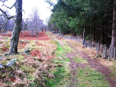 Walk along the path through Torphantrick Wood